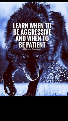 alone wolf quotes wolves \ alone wolf quotes ; alone wolf quotes wolves ; alone wolf quotes walks Great Quotes, Quotes To Live By, Me Quotes, Motivational Quotes, Inspirational Quotes, Lone Wolf Quotes, Warrior Quotes, Badass Quotes, The Words