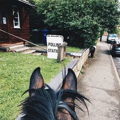 OXFORDSHIRE, ENGLAND  That's the way it's done. Bravo The Gaitpost / @sarah_heseltine  who rocked the vote  in the British general election in style today. VOTE: it's not only your right, but a privilege. •  Tag your photo #LifeBetweenTheEars for a chance to be featured. •  #rideon #theworldfromasaddle #equestrianphotography #equestriantravel #bestview #betweentheears #rockthevote #britishgeneralelection Oxfordshire Personal Training #whateverittakes #thankyou #thegaitpost #sarahhesteltine