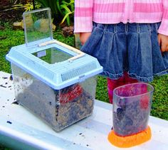 Creating Worm Farms. Step 1:Find a glass or plastic container large enough to fit worms and soil.  We used small aquariums but even a plastic soft drink container would be suitable. Step 2:Layer soil and sand in the container, making sure the top layer is soil.  If the soil is dry, add some water so that the soil stays moist. Step 3:Gather your worms. Step 4:    Add food (lettuce, egg shells, tea bags, coffee grinds, fruit peel) to the top of the container.     Step 5:    Add your worms to th...