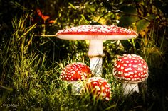 Fungus freckles   by Vahlenkamp   http://ift.tt/2cMbt4A