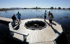 MURRIETA: Storms revive Santa Rosa Plateau vernal pools | Murrieta News | PE.com