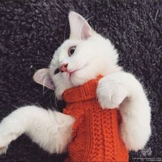 Image via We Heart It #cat