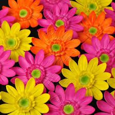 colorfull daisys wallpaper - Google Search