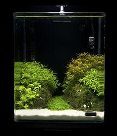 https://flic.kr/p/9fCDdP | Nano 20 | Nano contestants at the Art of the Planted Aquarium, Hannover 2011