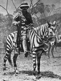 World War I, 1915, Pony changed into a Zebra for operations in East Africa (Photo by Popperfoto/Getty Images)