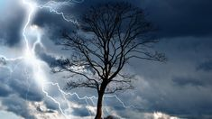 Shop Lone tree and lightning postcard created by HTMimages. Personalize it with photos & text or purchase as is!