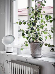 Green Interior Design, Beautiful Interior Design, Interior Design Living Room, Indoor Garden, Indoor Plants, Flower Window, Plants Are Friends, Plant Holders, Plant Decor