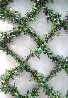 Bellas plantas que trepan y se enredan: Jazmín trepador
