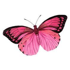 бабочка картинки нарисованные: 29 тыс изображений найдено в... ❤ liked on Polyvore featuring backgrounds, butterflies and fillers