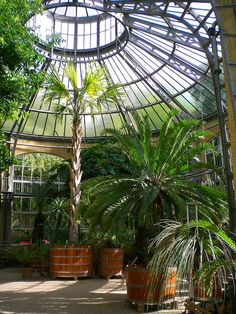 Amsterdam_De Hortus Botanicus  Why not have Palms in your Glasshouse.