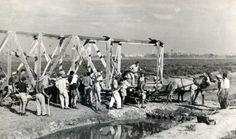 הקמת מגדל השמירה ביום העליה על הקרקע 1938