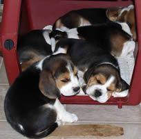 No room in the Beagle Inn!