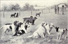 Group of Gun Dogs from 1915 - Gun dog - Wikipedia, the free encyclopedia Sand Pictures, Mongrel, Irish Setter, Best Dogs, Guns, Animals, Grouse, Greyhounds, Animaux