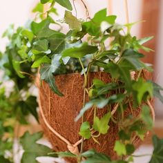 Diy Crafts Hacks, Diy Home Crafts, Garden Crafts, Garden Projects, House Plants Decor, Plant Decor, Coconut Shell Crafts, Recycled Garden, Organic Gardening Tips