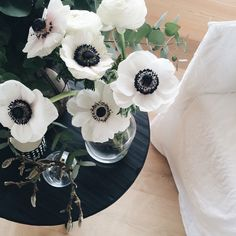 love these white poppies