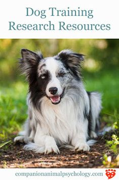 Have Dog Behavior Problems? Learn about Dog Behavior School and Clicker Training Dogs Stop Barking. Dog Training Courses, Dog Training Methods, Basic Dog Training, Dog Training Techniques, Training Your Puppy, Potty Training, Training Dogs, Training Classes, Training Schedule