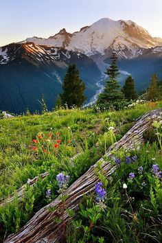 Rainier in the Cascade Mountains of Washington/ I've been to the very top/vistas and moments of a lifetime All Nature, Amazing Nature, Places To Travel, Places To See, Travel Destinations, Beautiful World, Beautiful Places, Beau Site, Cascade Mountains