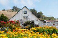 harley farms - cute little goat farm, also does small weddings - pescadero, ca