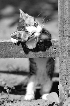 Cat in Sports Cute Kitten Playful Kitten Cute Cats Cat outdoors Funny kitten sweet kitten. Cute Kittens, Cats And Kittens, Kittens Playing, Beautiful Cats, Animals Beautiful, Beautiful Figure, Cute Baby Animals, Funny Animals, Photo Chat