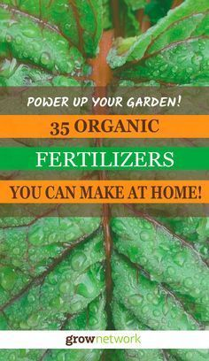 35 Cheap and Easy Organic Fertilizers you can make at home!