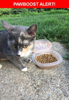 Is this your lost pet? Found in Carlisle, PA 17013. Please spread the word so we can find the owner!    Near Enola Rd & Spur Rd