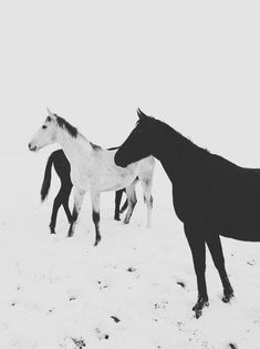 Horses - nice picture