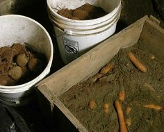 carrots in a wooden box with sand and peat moss layers