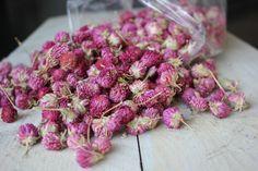 Purple Daisy #driedflowers#othmardecorations