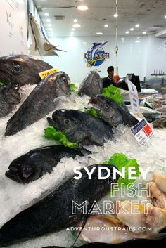 Searching For Seafood   Sydney Fish Market   Sydney Markets   Fresh Food Market    Fish Market Australia   Where To Eat In Sydney   Seafood Market   Things To Do In Australia   Things To Do In Sydney   Travel In Australia   Australia East Coast   Best Pla