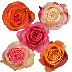 Roses - Assorted Bicolor - 125 Stems - Sam's Club