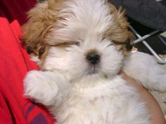 Looks like a baby Sophie. I miss my dog :(