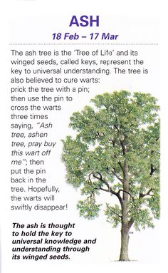 Sacred celtic trees Ash
