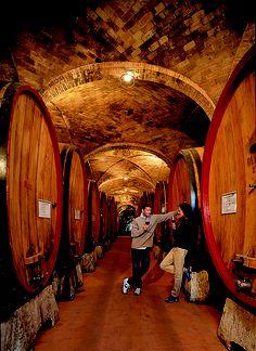 Visit cellars in Italy.... Villa Opera wine cellar in Tuscany, www.preciousvillas.com