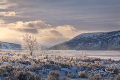 yellowstone winter | Frosted Trees, Lamar Valley, Yellowstone National Park