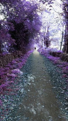 A purple path  source Flickr.com