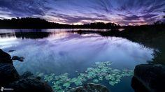 alba-de-noche,-lago,-cielo,-lirios-de-agua-184727