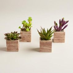 "Our Mini Succulent Pots look incredibly realistic - they're just like real plants, only you never have to water them! Each unique faux succulent comes in its own stylish planter pot. This ""evergreen"" set is an affordable way to add a touch of spring splendor anywhere in the home."