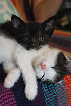 Oh my!!! I think I need to get some more kitties! These two are just too cute!