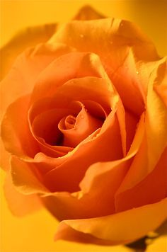 If you know me really well you should know I HATE the Color Orange...but Ironically I LOVE Orange Roses :/
