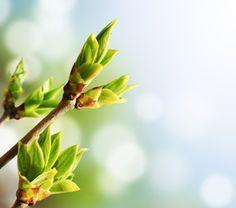 Doctor Natura: Ce este gemoterapia?