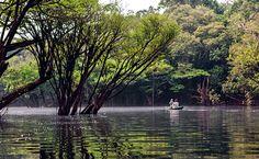 Passeio de canoa entre as copas das árvores