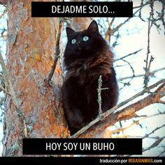 Dejadme solo. Hoy soy un buho.  Mi madre probó traducir para mi, pero sé suficiente Español. @Lisa a Farme / Anne Karakash