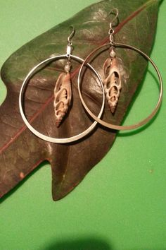 Sliced shells on silver plated hoops.