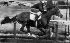 """I remember that race. I remember we were dogging it with the other horses. I wasn't supposed to tap him [with the whip]. But I did — and he just took off.    ""We won that race by eight lengths. He was a bold horse. Brave. He could handle anything. The grass. The mud. Anything.    ""Northern Dancer could do it all."""