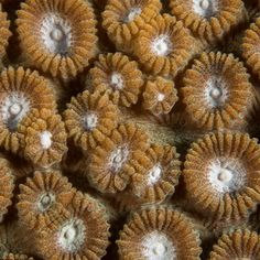 Macro Coral Cups: Shawn Miller