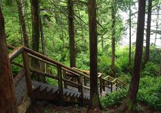 Follow the trail to happiness in Tofino.In and around Tofino, come face to face with some giants (of the tree variety) and walk or climb your way through Clayoquot Sound's diverse ecosystem to some spectacular views on these trails.