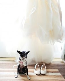 Furry companions are dressing up, joining the bridal party, and mingling during cocktail hours at weddings all over the country. Check out ways you can spiff up your pooches with ideas from some of our real weddings.