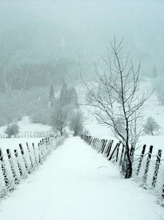 A snowy day. - Sarah Deschamps - - A snowy day. 🇳🇴 Snowy road to the meadow (Sogn og Fjordane, Norway) by Knut P. Winter Szenen, Winter Love, Winter Magic, Winter Christmas, Norway Winter, Winter Socks, Thanksgiving Holiday, Winter Travel, Winter Nails