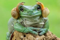 Cute and Adorable Princess Leia Frog Credit: Tanto Yansen Indonesia Animals And Pets, Baby Animals, Funny Animals, Cute Animals, Wild Animals, Animals Kissing, Smiling Animals, Animals Photos, Nature Animals