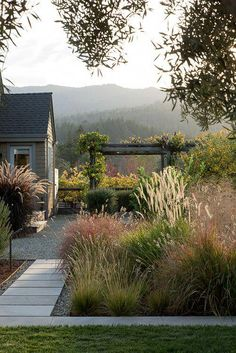 Herbaceous perennials in painterly palettes? Even if it isn't the direct hand of Piet Oudolf, you can bet the garden beds were inspired by the Dutch landscape designer's ubiquitous style. Here are 10 plant combinations to try: Napa Valley, Drought Resistant Plants, Drought Resistant Landscaping, Garden Makeover, Ornamental Grasses, Ornamental Grass Landscape, Flower Landscape, Front Yard Landscaping, Garden Paths
